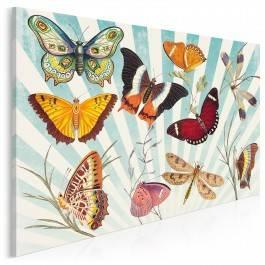 Atlas motyli - nowoczesny obraz na płótnie - 120x80 cm
