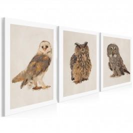 Tryptyk z sowami - nowoczesny obraz na płótnie - 3szt. 50x70 cm