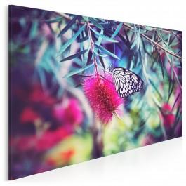 Życie motyli - zdjęcie na płótnie