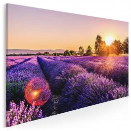 Słońce Prowansji - zdjęcie na płótnie - 120x80 cm