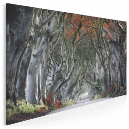 Osobliwy szlak - fotoobraz do salonu - 120x80 cm