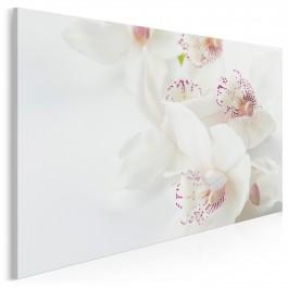Delikatne orchidee - zdjęcie na płótnie - 120x80 cm