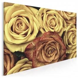 Herbaciane róże - fotoobraz na płótnie - 120x80 cm