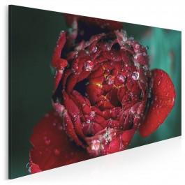 Poranna rosa - fotoobraz na płótnie - 120x80 cm