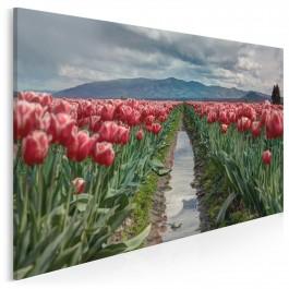 Pola tulipanów - fotoobraz do sypialni - 120x80 cm