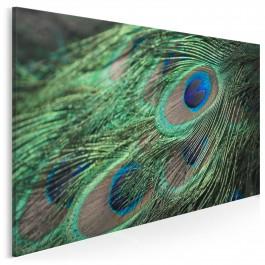 Pawie pióro - fotoobraz do sypialni - 120x80 cm