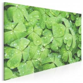 Czterolistna koniczynka - zdjęcie na płótnie - 120x80 cm
