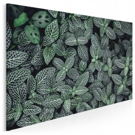 Ogród botaniczny - fotoobraz na płótnie - 120x80 cm