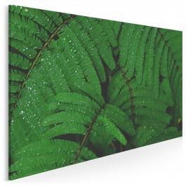 Soczyste zielenie - fotoobraz do salonu - 120x80 cm