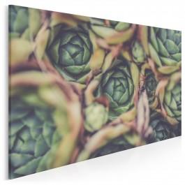 Kolorowe sukulenty - nowoczesny obraz na płótnie - 120x80 cm