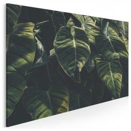 Malachitowy cień - fotografia na płótnie - 120x80 cm