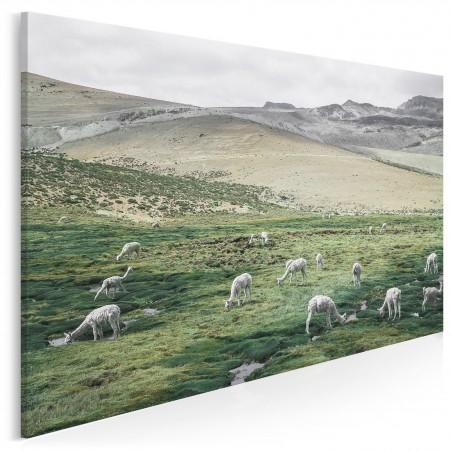 Pejzaż z alpakami - zdjęcie na płótnie - 120x80 cm