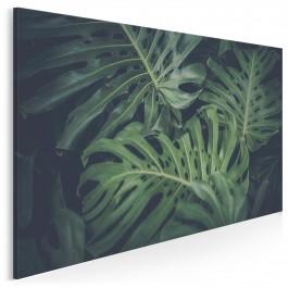 Tropikalna monstera - fotoobraz na płótnie - 120x80 cm