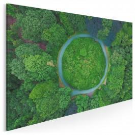 Baśń o mchu i paproci - fotoobraz na płótnie - 120x80 cm