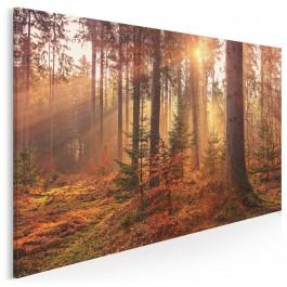 Leśne runo - fotoobraz na płótnie