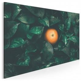 Brazylijska pomarańcza - fotoobraz do kuchni